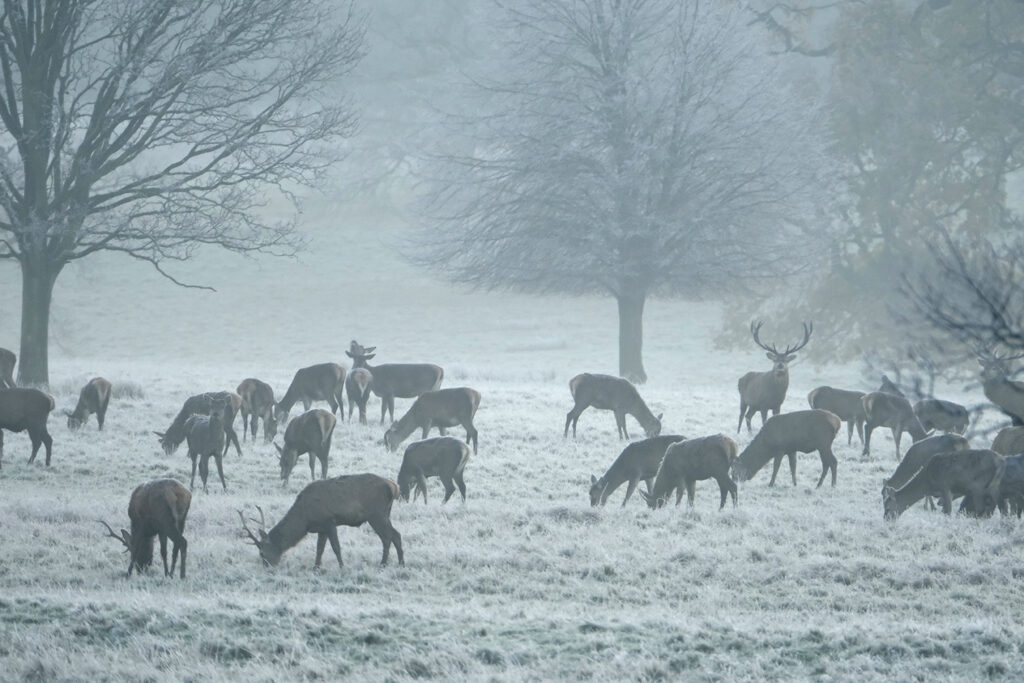 Helmingham Hall, Suffolk, England